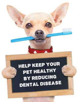 Help keep your pet Healthy by reducing dental disease